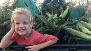 girl helping glean corn