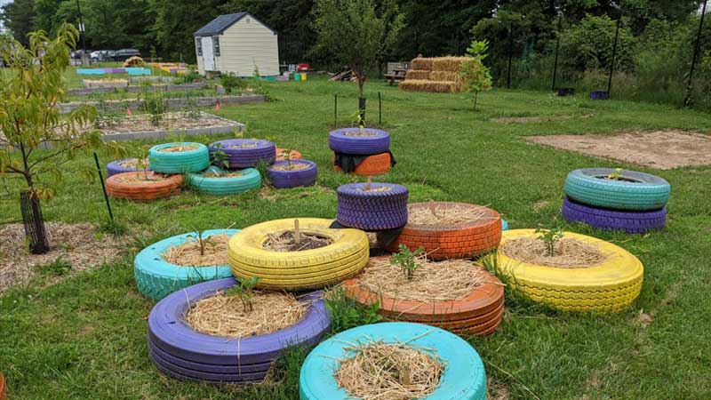 tire planters in MFB's educational garden