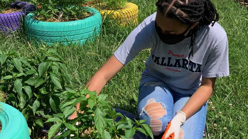 volunteer in MFB's educational garden