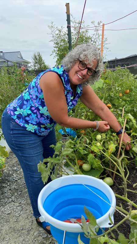 picking tomatoes in Bay Bridge Cove's community garden